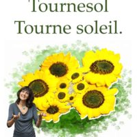 Tournesol tournesoleil